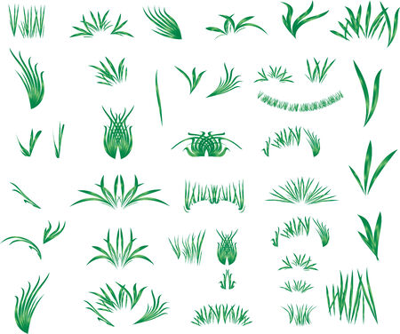 The grass Vector