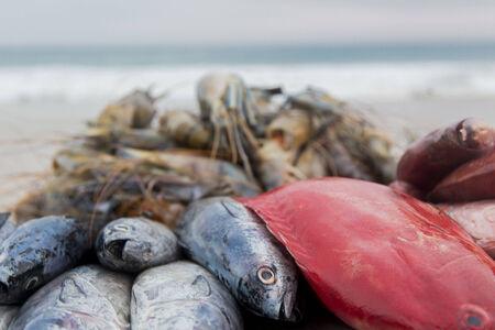 fishery: Fresh fish on the beach Stock Photo