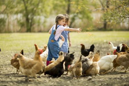 Twee kleine meisje voederen kippen