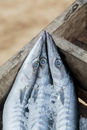 Barracudas photo