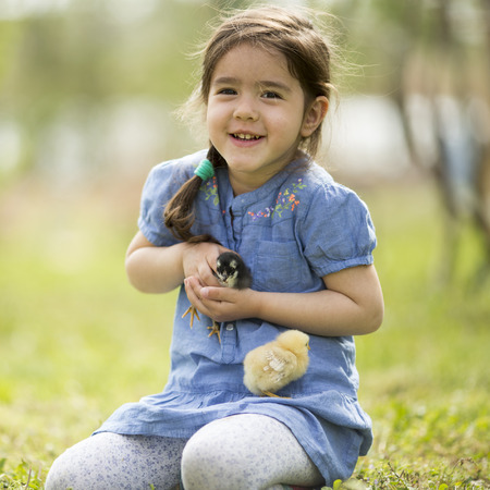 Cute little girl with the chickens photo