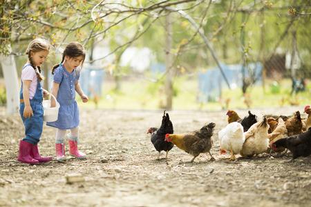 두 어린 소녀 먹이 닭