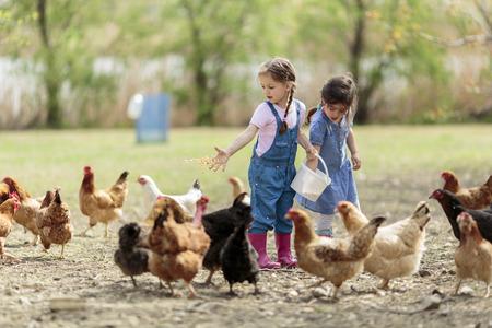 agricola: Dos ni�a alimentaci�n de pollos Foto de archivo