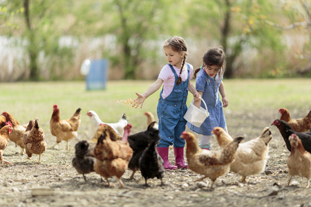 Two little girl feeding chickens photo