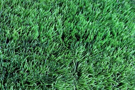 Grass Imagens