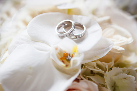 Wedding rings on the roses Stock Photo
