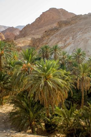 mountain oasis: Mountain oasis Chebika, Tunisia
