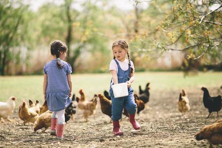 animales de granja: Dos ni�a alimentaci�n de pollos Foto de archivo