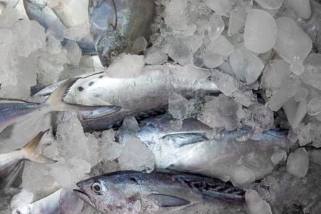 fish on ice: Fish on the ice in Kerala, India