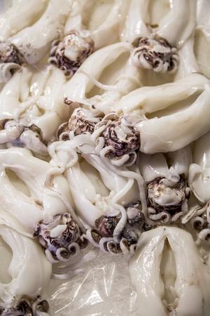 squids: Close up at squids