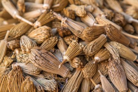 berber: Berber toothpicks (Ammi visnaga) on the market i Marrakesh, Morocco