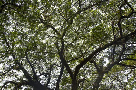 treetop: Treetop Stock Photo