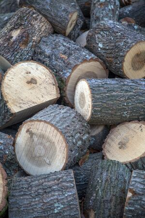 stockpile: Stockpile of logs Stock Photo