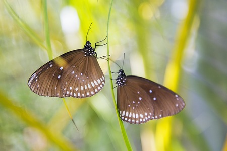 metamorphose: Butterflies from Bai Orchid and Butterfly Farm at Chiang Mai, Thailand