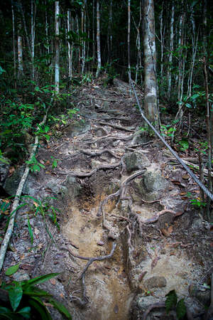 riverbed: Dry riverbed in the forest in Thailand