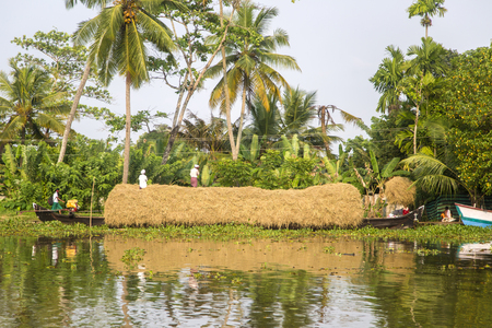 backwaters: KERALA, INDIA - OCTOBER 16, 2015: Unindetified people at backwaters in Kerala, India. The backwaters are an extensive network of 41 west flowing interlocking rivers, lakes and canals that center around Alleppey, Kumarakom and Punnamada. Editorial