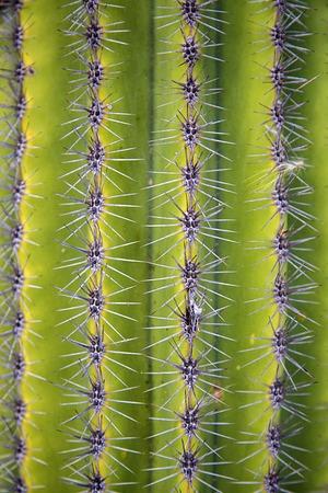 Closeup detail of the desert cactus