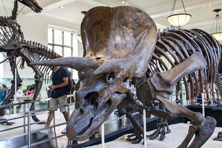 quadruped: NEW YORK, USA - JULY 31, 2016: Detail from American Museum of Natural History in New York. Museum is established at 1869 and today is one of the largest museums in the world.