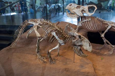 New York, États-Unis - 1er août 2016: Détail de l'American Museum of Natural History à New York. Le musée est établi à 1869 et est aujourd'hui l'un des plus grands musées du monde. Banque d'images - 61309108