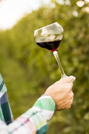 winemaker: Young winemaker tasting red wine in vineyard