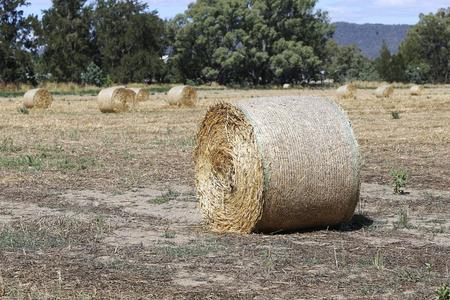 hayroll: View at hayrolls on the field in Mudgee, Australia