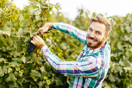 Handsome young man working in the vineyard Фото со стока - 85542877