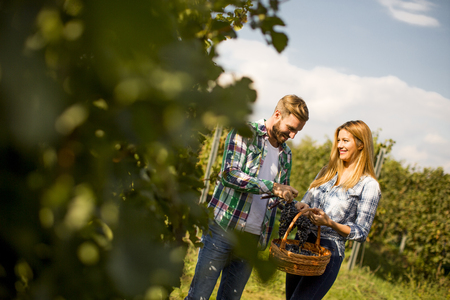 Lovely young couple with grape basket in the vineyard Stock Photo