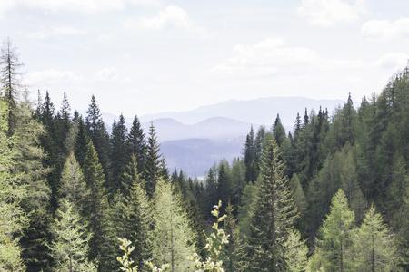 松林山 Pokljuka、スロベニア