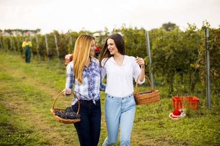 Two pretty young women walking in the vneyard with grapes