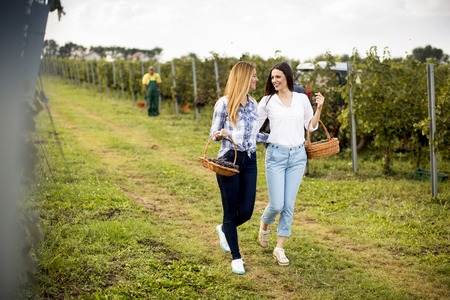 Two pretty young women walking in the vneyard with grapes Фото со стока - 96005001