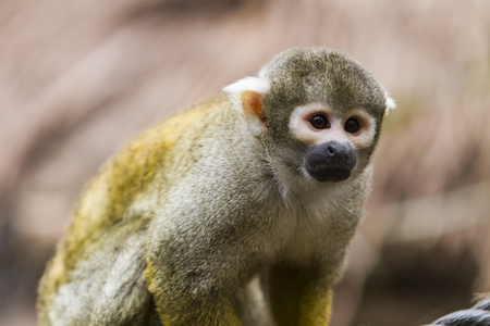 View at Squirrel monkey outdoor