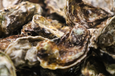 Closeup of the fresh oysters on the market