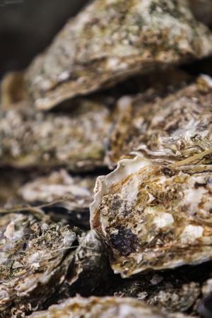 市場の新鮮な牡蠣のクローズアップ