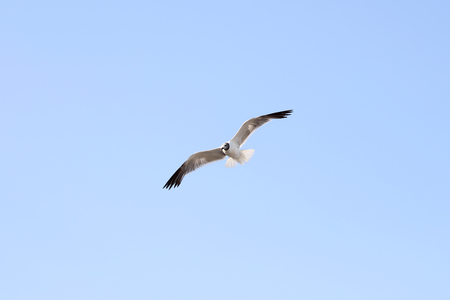 Large seagull against the sky Stock Photo