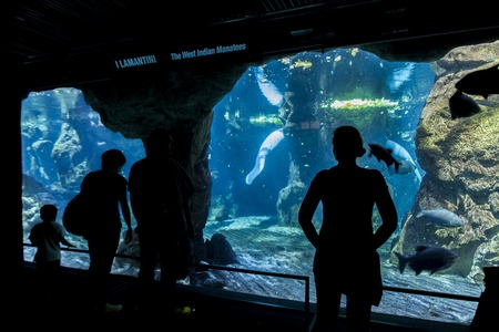 GENOA, ITALY - JUNE 2, 2015: Unidentified people at Genoa aquarium. The Aquarium of Genoa is the largest aquarium in Italy and among the largest in Europe. Editorial