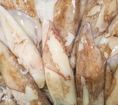 Close up view at fresh squid on the market Stock Photo