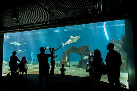 GENOA, ITALY - JUNE 2, 2015: Unidentified people at Genoa aquarium. The Aquarium of Genoa is the largest aquarium in Italy and among the largest in Europe. Stock Photo