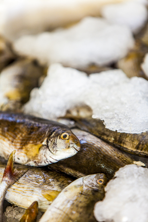 Closeup of the fresh seafood on ice