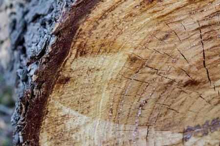 Bouchent la vue à la texture du bois du tronc d'arbre coupé Banque d'images - 89436581