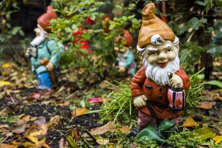 Closeup of the garden gnome in the autumn backyard
