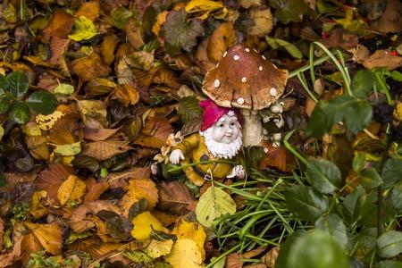 秋の裏庭の庭のノームのクローズアップ 写真素材