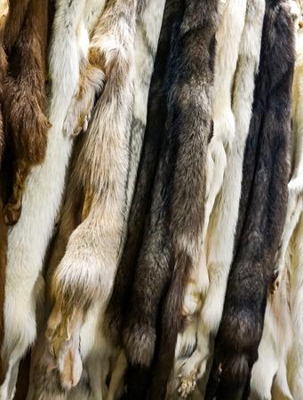 Closeup of the natural arctic fox furs