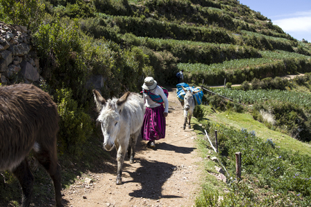 ISLA DEL SOL, BOLIVIA - JANUARY 7, 2018: Unidentified woman with donkeys on Isla del Sol on Titicaca lake. It is the biggest island on the high altitude lake Titicaca