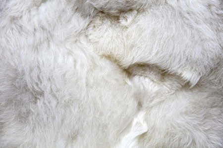Closeup of baby alpaca wool on the market