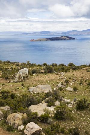 Donkey at Isla del Sol on lake Titicaca in Bolivia