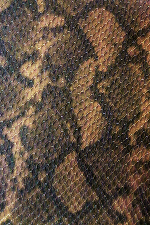 Closeup detail of the snake skin leather