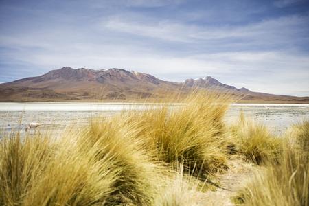 Laguna Hedionda at Andean altiplano in Bolivia