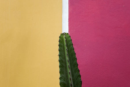 View at the cactus by the yellow and pink wall Imagens