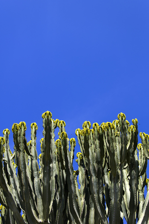 View at cacti flowers under the blue sky