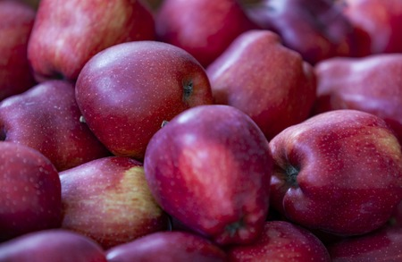 Group of fresh apples on the local farm market